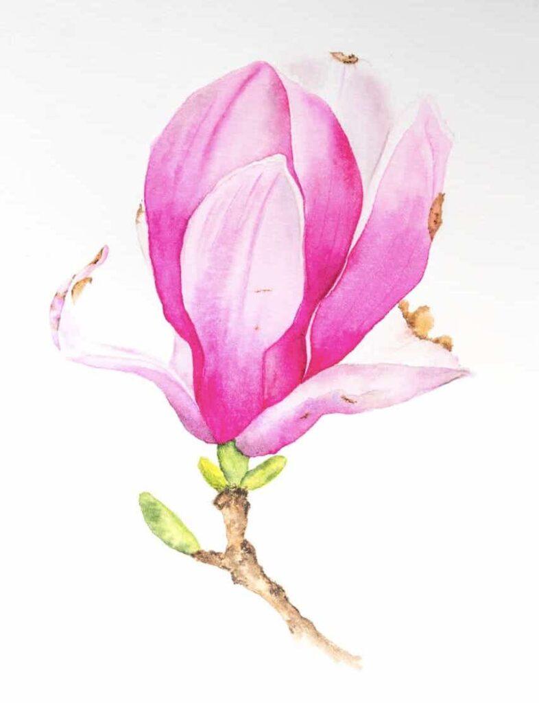 Il dipinto del fiore di Magnolia finito