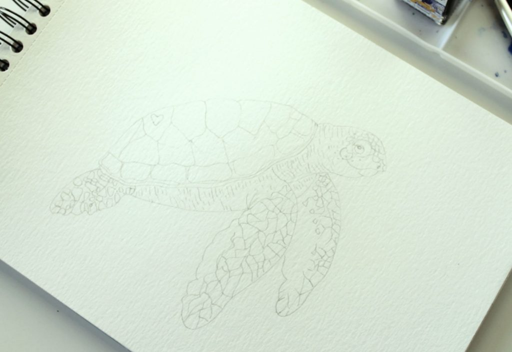Disegno tartaruga Winsor & Newton