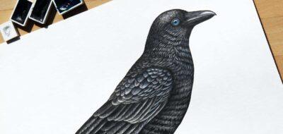 Disegno di un corvo