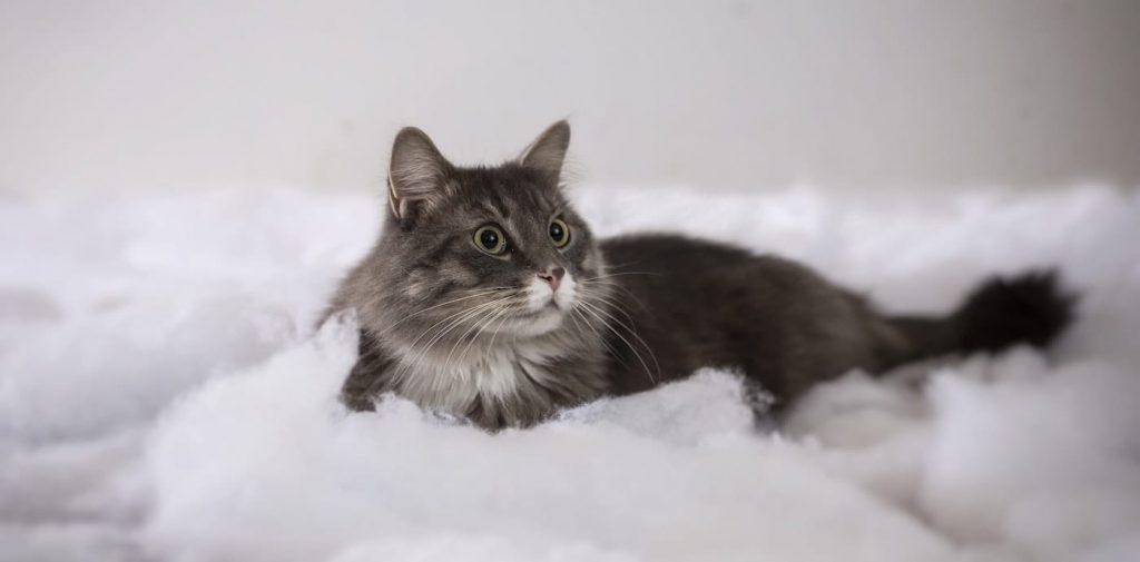 Gatto sdraiato su cuscino